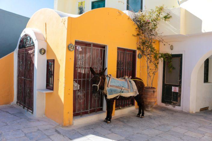 Esel in Oia