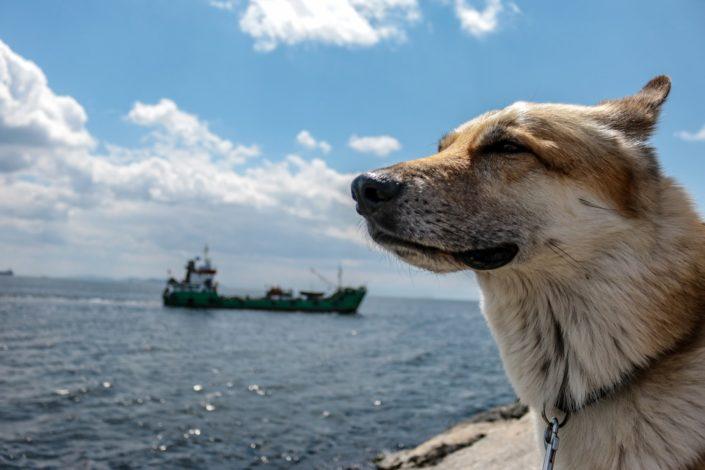 Baku und die türkischen Fischer