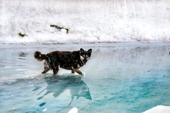 Der Wolf von Pamukkale