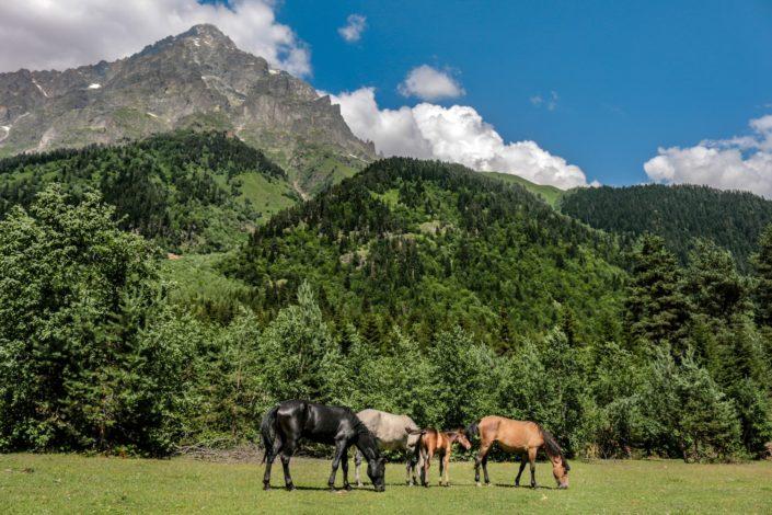Natur und Pferde im Kaukasus
