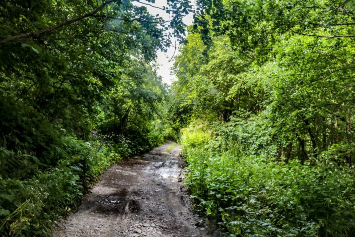 Georgischer Regenwald :D
