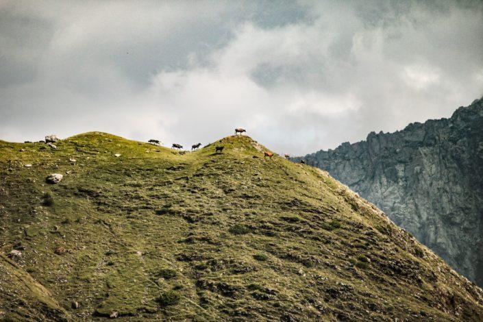 Die Berge um Stepanzminda