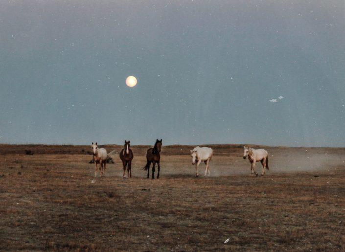 neugierige Pferde in der Steppe