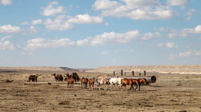 Wasserloch in der kasachsischen Steppe