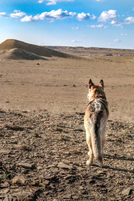 Baku betrachten die Kamele lieber aus der Entfernung.