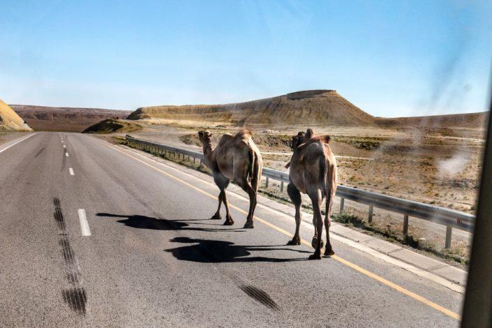 Kamele...