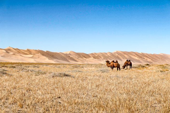 in der Provinz Süd Gobi