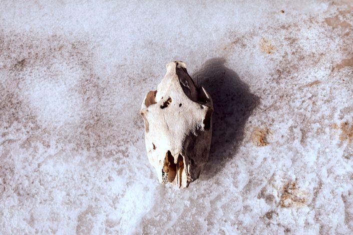 Tier-Überreste | Keine Seltenheit in der Mongolei