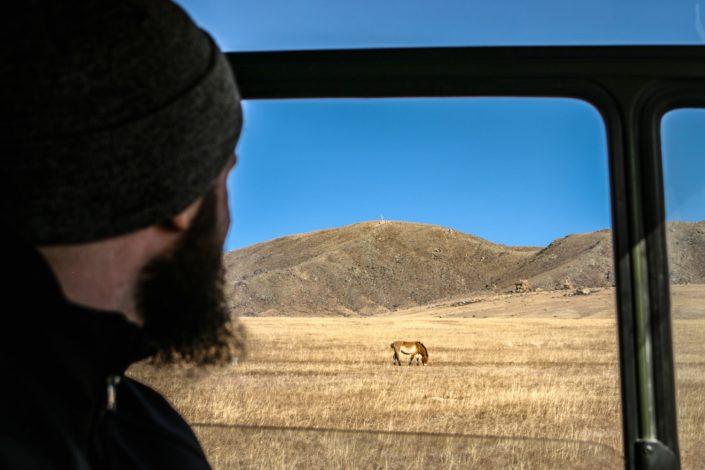 Hustai Nationalpark   Wildpferde in Sicht