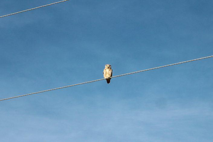 Hustai Nationalpark | Etwa 130 Vogelarten gibt es hier
