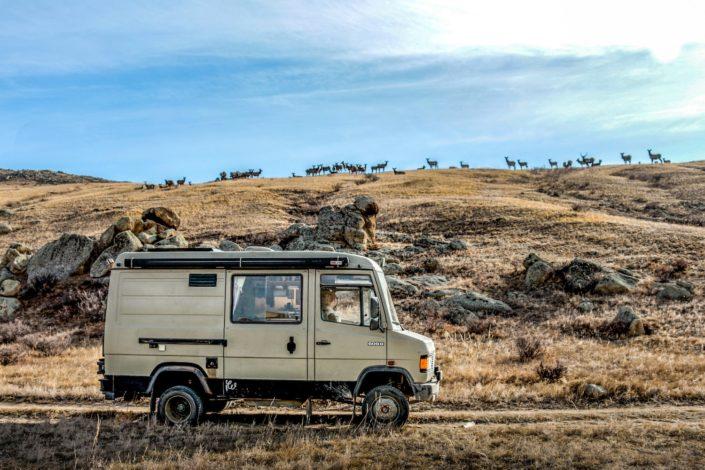 Hustai Nationalpark | Im Hintergrund sibirische Wapitis