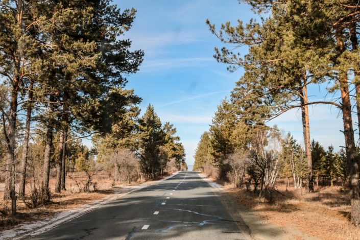 Es werde Wald | Wenige Kilometer vor der Grenze