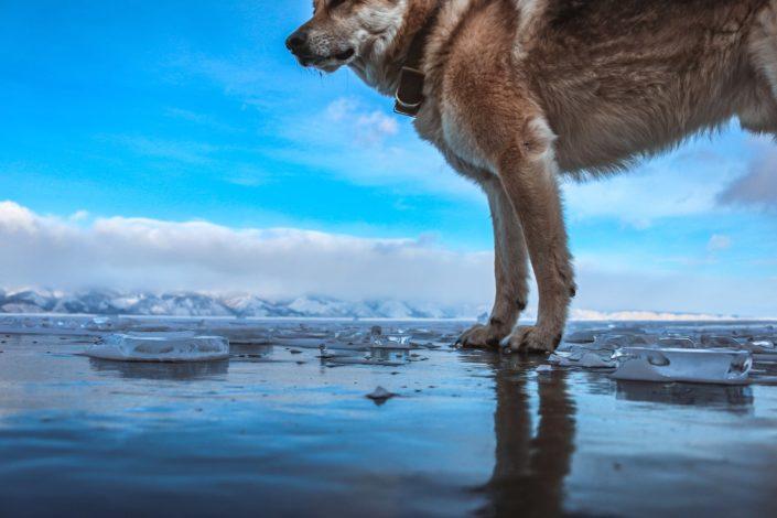 Auf dem Eis der Baikals