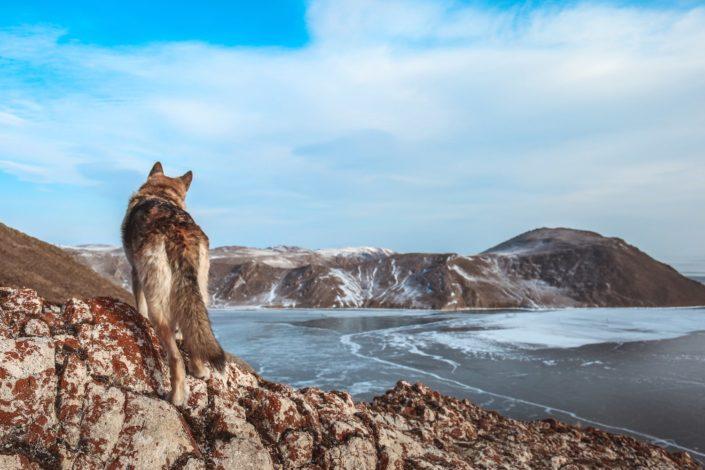 Auf dem Weg nach Olchon - Baikal See
