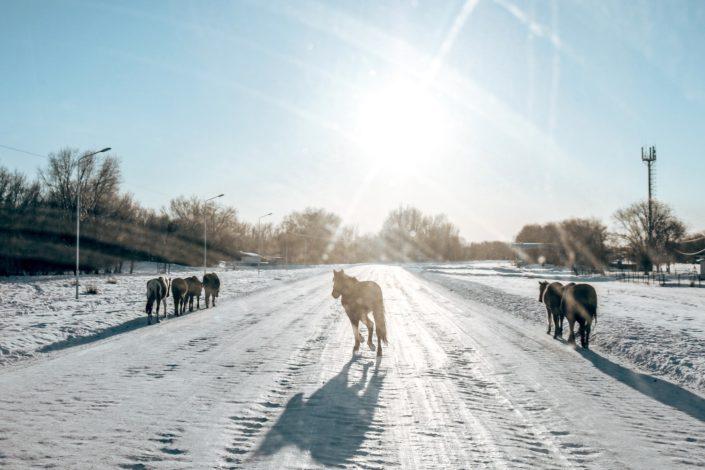 Pferde haben immer Vorrang!