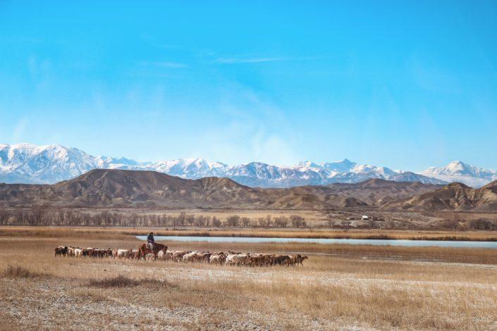 Hirte mit seinen Schafen - Kirgistan