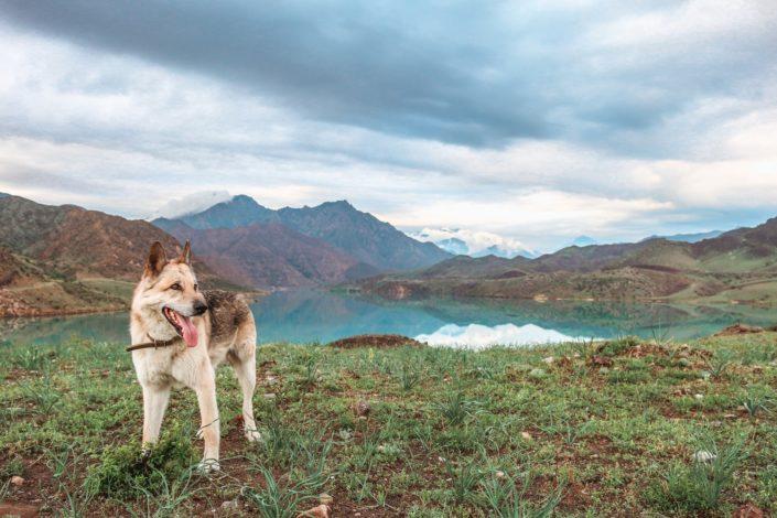 ...der wasserreichste Fluss in Kirgistan.