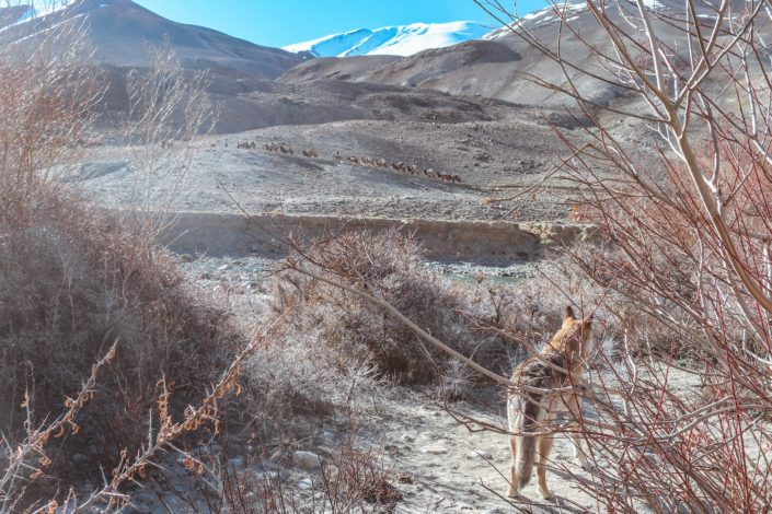 Karawane im Wakhan Valley - Baku etwas irritiert
