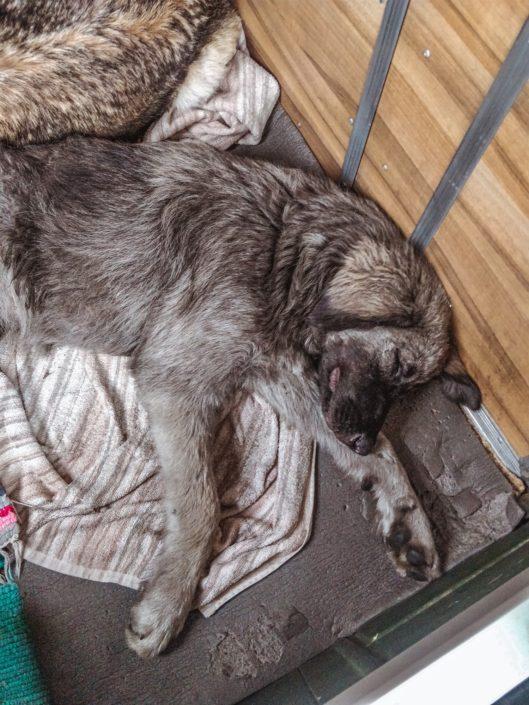 Sie war sehr erschöpft - She was very exhausted